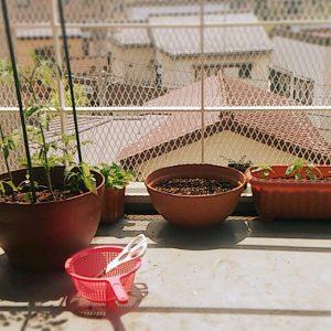 有機栽培の野菜は家庭菜園向き