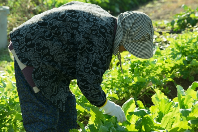 有機栽培(オーガニック)と化学肥料栽培