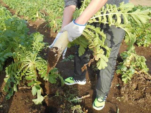 有機栽培(オーガニック) 健康的な野菜