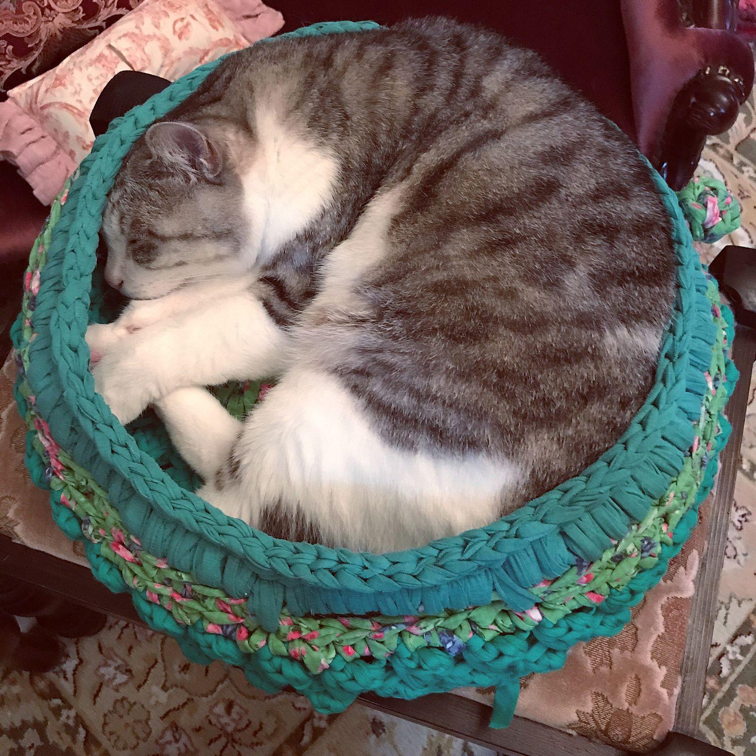 ズパゲッティ 猫ベッド